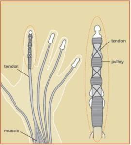 tendon-nerve-vessel-repair
